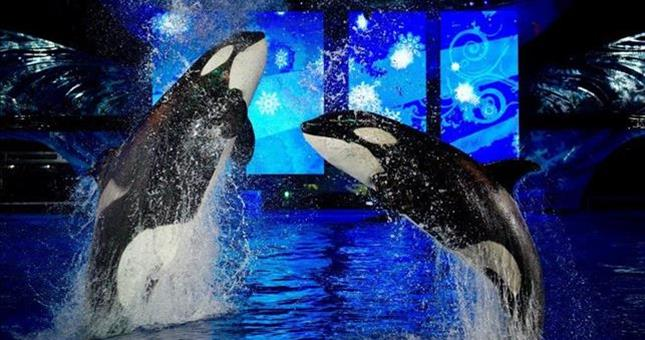 shamu and friends star in shamu christmas miracles